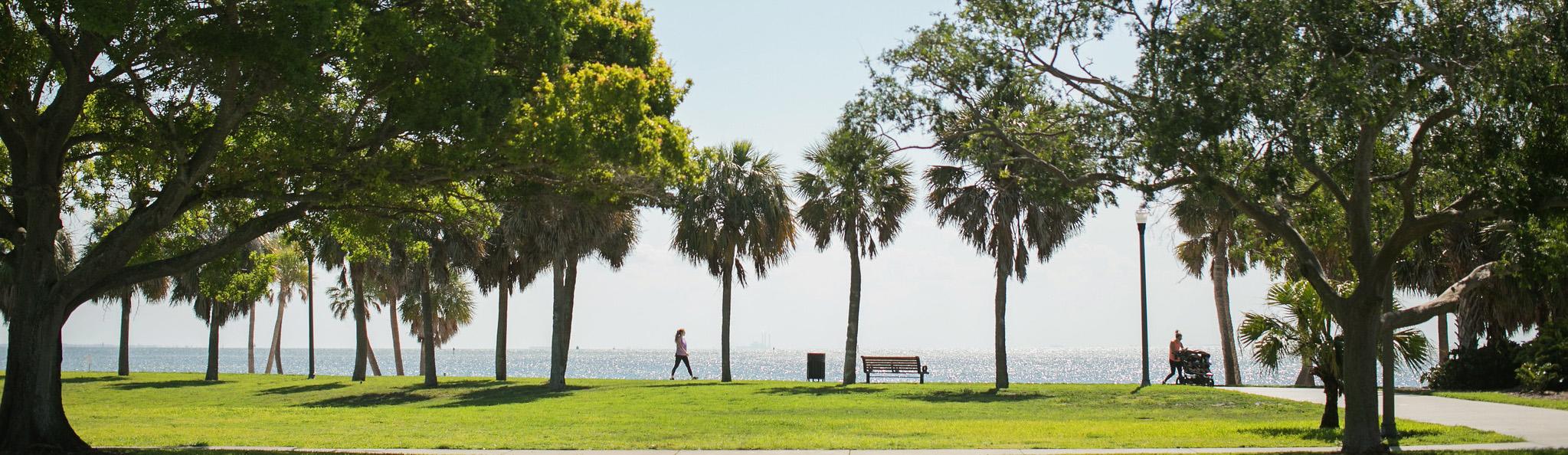 trees and bay at north straub park